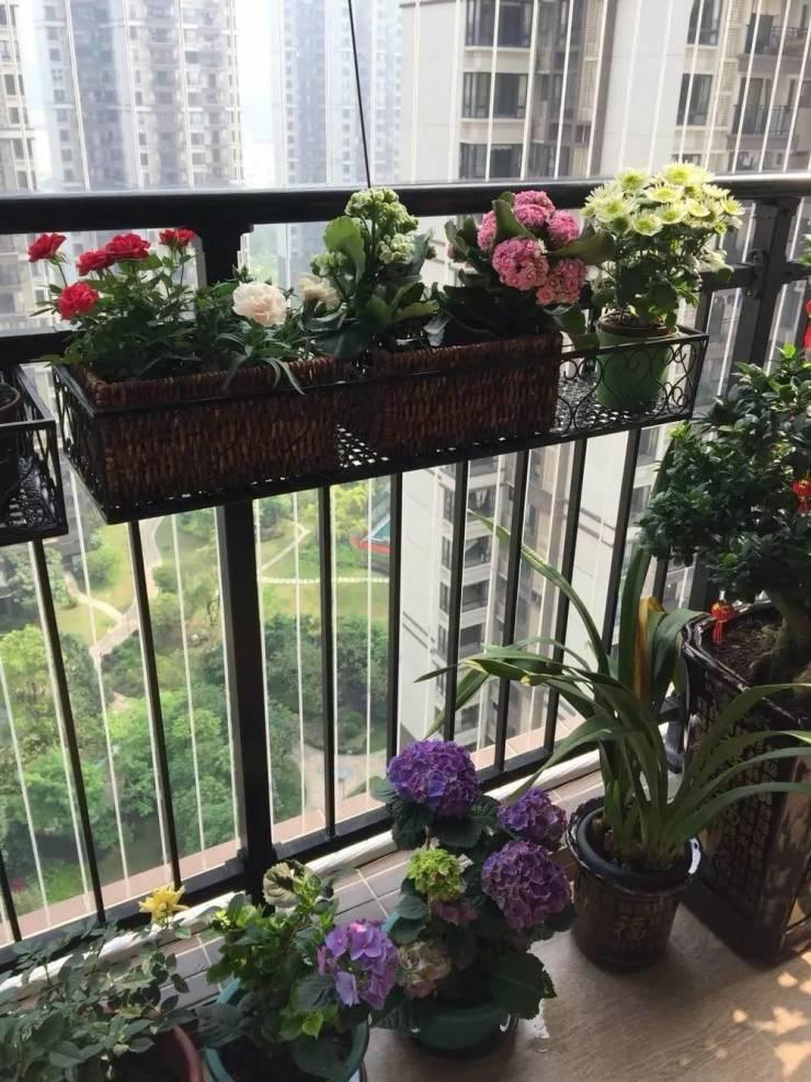 阳台种花种草,这样弄就成花园了!