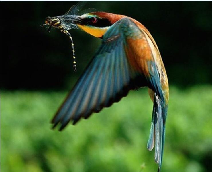 最漂亮的鸟_最罕见的鸟,太美了