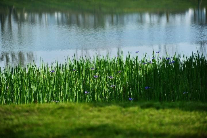 华宇观澜华府坐拥稀缺湖山美景 亲近自然由此开启
