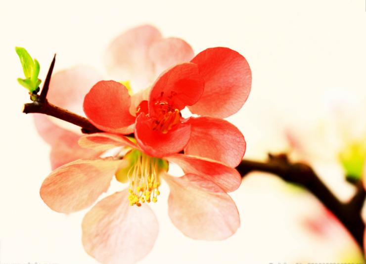 园林大赏——赏春,赏璟,赏海棠