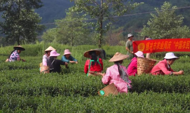 腾冲:稻谷香里喜庆农民丰收节
