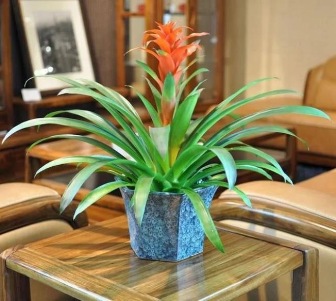 客厅应该放什么植物,风水好还招财?