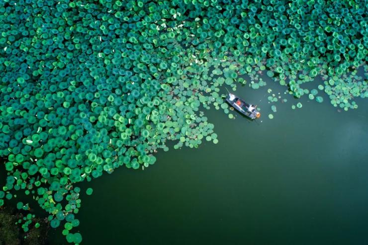 解密大渔篇|奢享生态富氧 邂逅春城城市会客厅