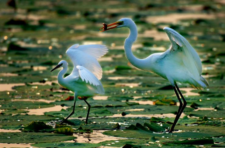 万科米哈斯小镇:来北戴河旅游的人,大多没看过这里真正的美景!