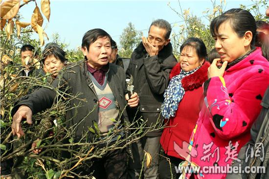 枝江吹响春耕备耕集结号 今年春播面积57.5万亩