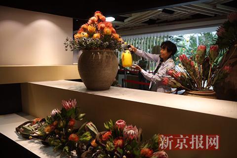 """迎峰会市属公园新增花卉景观 北京植物园举办""""非洲植物精品展"""""""