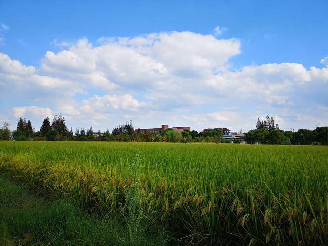 上海试点土地流转新模式:农民拿经营权入股村集体