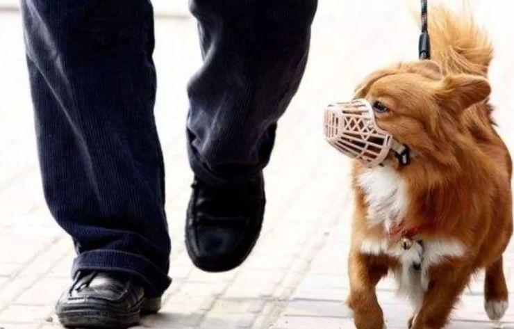 @宁德人:新规出台!小区内遛狗必须…还有小区广告费、停车费归谁?